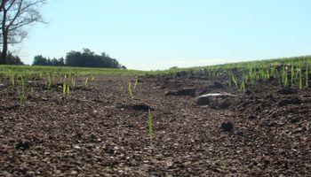 El 36 % del suelo argentino sufre procesos de erosión
