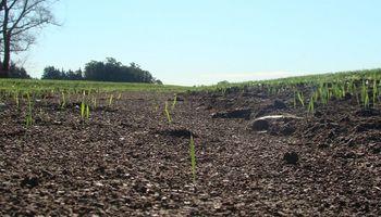 Santa Fe presentó una plataforma digital para preservar los suelos