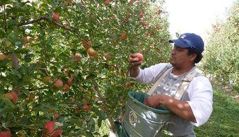 La exportación de manzanas de la Patagonia norte a Brasil creció 229 por ciento