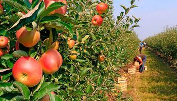 Las frutas argentinas se posicionan en el mercado mundial