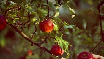 Un emprendimiento que supo sacarle el jugo a las manzanas del Alto Valle