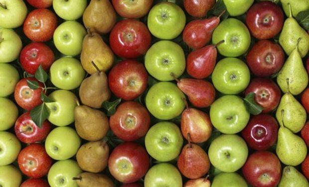Uno de los temas para mejorar en manzanas y peras es la aplicación de calcio en el momento óptimo.