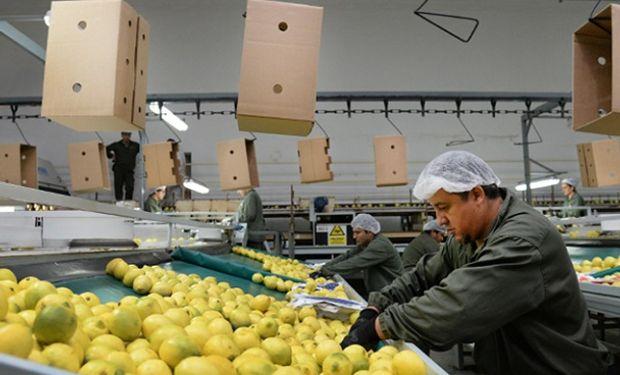 Europa rechazó los limones argentinos por una enfermedad y se buscan nuevos destinos