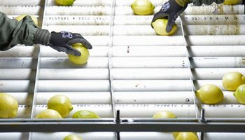 Argentina suspende la exportación de limones tucumanos a Europa por 15 días