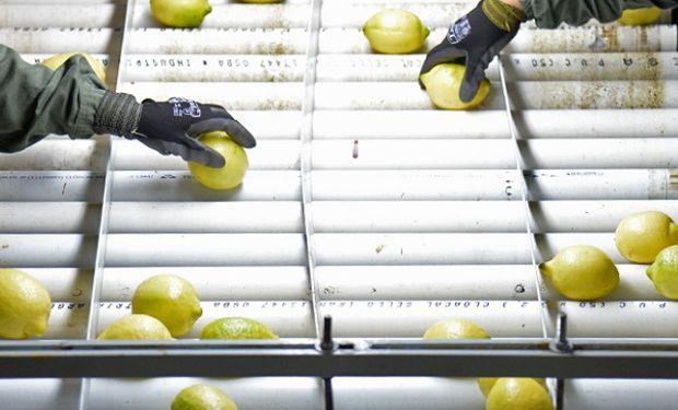 La Unión Europea levantó la suspensión y se reabre el mercado de cítricos argentinos