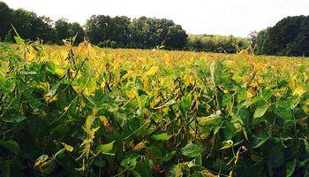 El margen bruto de la soja en Córdoba se reduciría un 42%