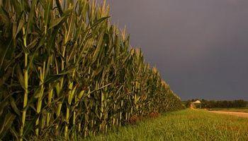 Ecuación de la agricultura se presenta sumamente compleja