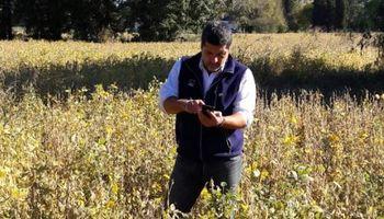 Presentan una aplicación para calcular los márgenes agrícolas