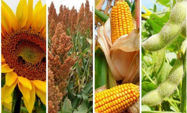 MARGEN BRUTO. Girasol, sorgo, maíz, soja 2016/17.