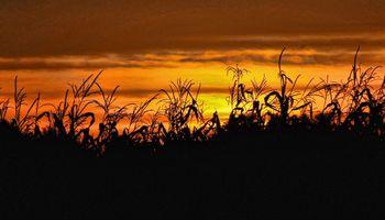 Suben los fertilizantes y retrocede la relación de canje contra soja, maíz y trigo