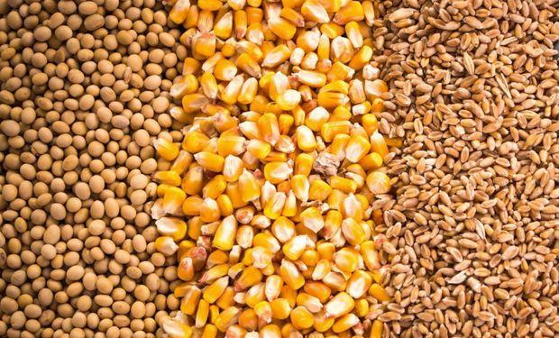 El mercado de soja, trigo y maíz se prepara para un informe clave