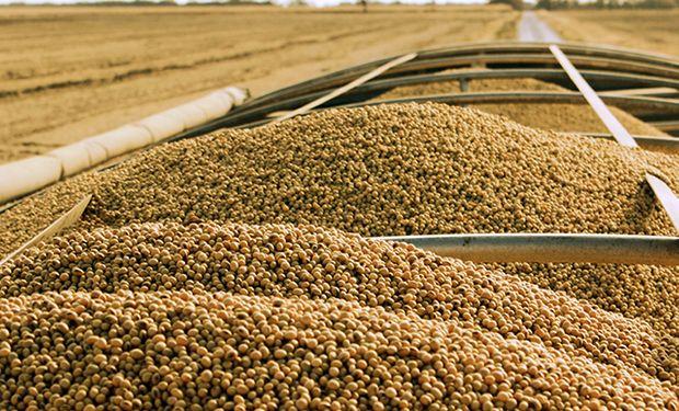 Caen la soja, el maíz y el trigo en Chicago.