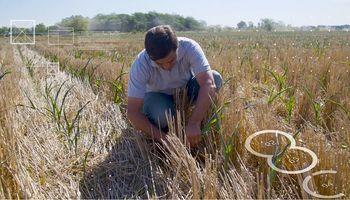 En una miniserie: se estrena una nueva forma de contar el campo argentino