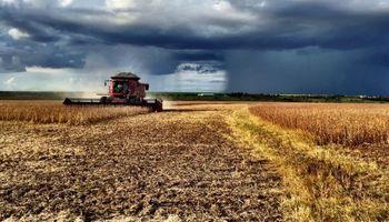 Más soja en Brasil: se recuperan los rindes en zonas claves