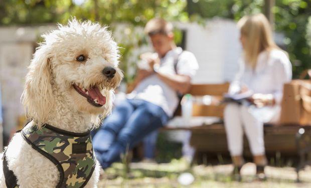 En Argentina y en el mundo: los nombres de perros más usados