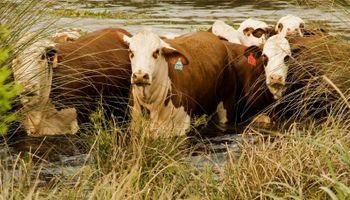 Inundaciones: disponen medidas de excepción para el movimiento de animales