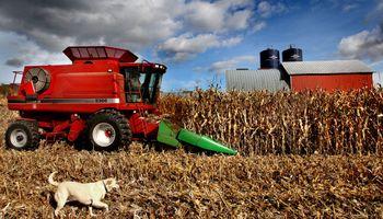 Maíz en Estados Unidos: avanza lo que será una mega cosecha