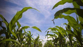 Cambio climático llegó para quedarse: mejoramiento genético es clave
