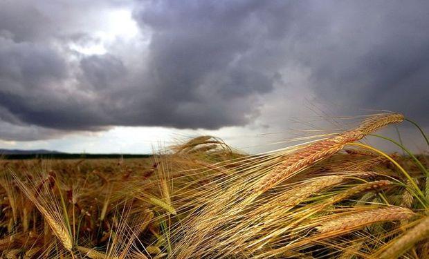 En gran medida se debe a la reducción del área sembrada.