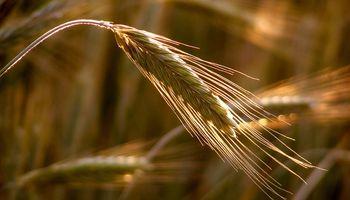 Cereales: cae la importación desde Asia