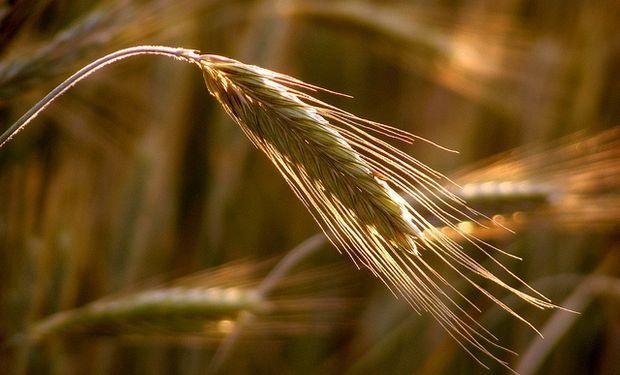 La demanda adquirió 272.600 toneladas de trigo 2015/16.