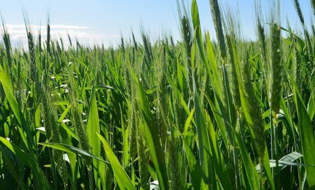 Atención al diseñar la estrategia comercial del cultivo.