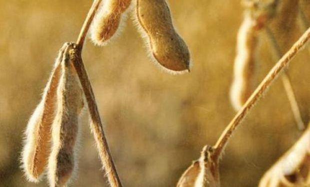Los precios de la soja registraron una leve caída en el mercado local.