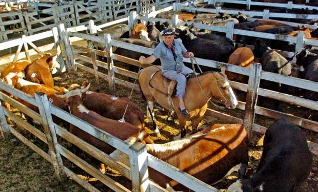 El último mes del 2015 en Liniers se vendieron 127.126 vacunos, 17.317 animales más que en Noviembre pasado.