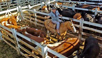 Ofertas de animales más bajas en los mercados de hacienda