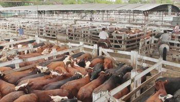 Liniers: la demanda exportadora generó que vacas y toros tengan valores en alza