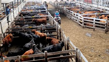 Liniers: cayó el precio de la vaca en una jornada con oferta acotada