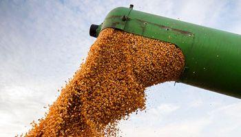 Incertidumbre local: en una jornada con poco volumen, qué precio se pagó por soja, trigo y maíz en Rosario