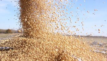 El precio de la soja volvió a caer quedando apenas por encima de los $9.200