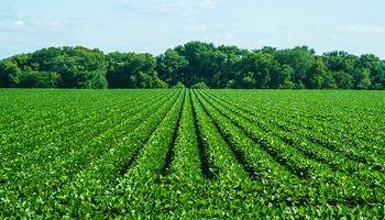 La soja cayó hasta US$ 20 y el maíz US$ 7 en Chicago