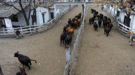 Liniers: con escaso volumen, la demanda operó de manera selectiva y mantuvo los precios