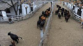 Liniers: la demanda pagó por la calidad y dejó precios destacados