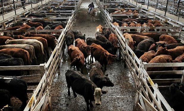 Caída de ventas en góndola, provocaron bajas en los precios de la hacienda en pie.