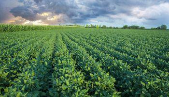 La soja en Chicago recibe el impacto del mercado climático