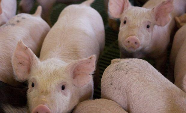 El mundo de las carnes: rebrote de Peste Porcina en China y desplome en la faena de Estados Unidos