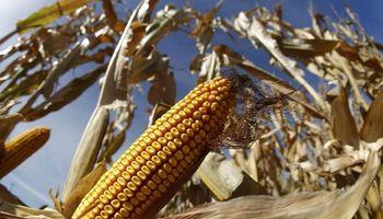 Soja, trigo y maíz: todos los precios de Rosario y lo que se pagaba hace un año