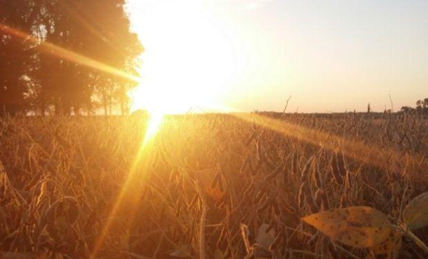 La semana termina positiva para los commodities agrícolas en Estados Unidos.