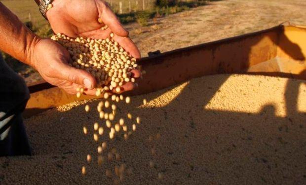 En horas tempranas de hoy los futuros de soja operan con bajas, cayendo del pico alcanzado la semana pasada.