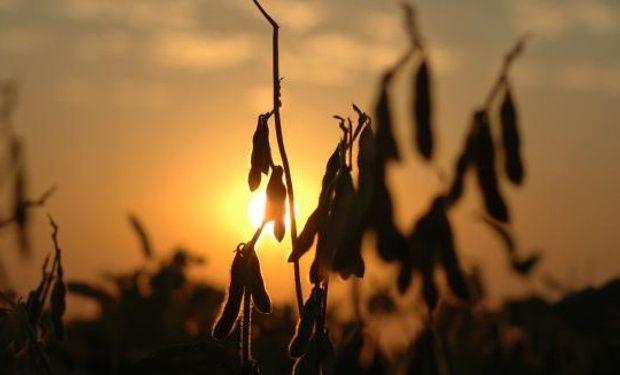 Por el lado del mercado argentino, se esperan buenas lluvias para estos próximos días, que van a ser de gran utilidad para poder retomar todos los labores de siembra.