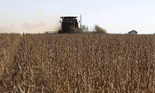 Leve baja a pesar del atraso en las labores de cosecha en EEUU.