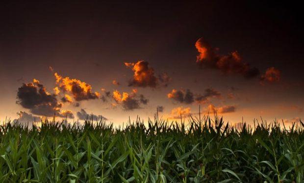 Clima favorable para el desarrollo de cultivos.