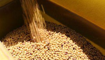 Soja, trigo y maíz: ¿vender, esperar o cubrir?