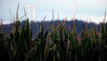 La prohibición de maíz OGM de México sumó un factor negativo al mercado de granos