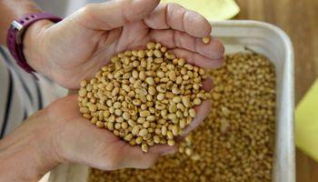 Por rebrotes y lluvias, hubo fuertes bajas para el precio de la soja