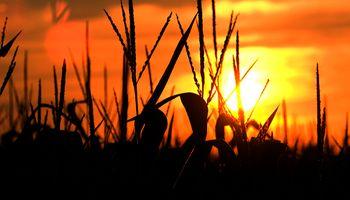 """El mercado de commodities agrícolas está bajo riesgo de un """"shock"""" de precios por el Covid-19"""