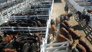 Ofrecimientos insuficientes en los mercados ganaderos